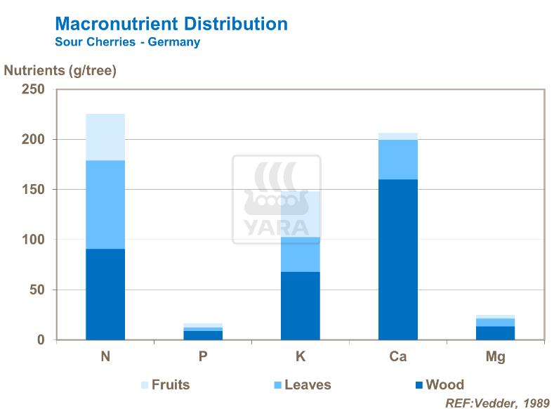Distribution des macro-nutriments dans cerises